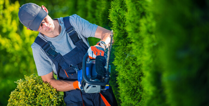 property maintenance worker cutting hedge